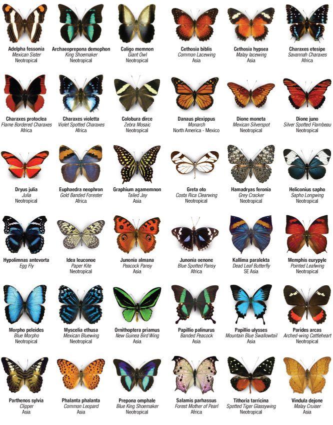Butterfly Wonderland Scottsdale - JUST GO! Guys - bring your girlfriends. Parents - bring your kids!