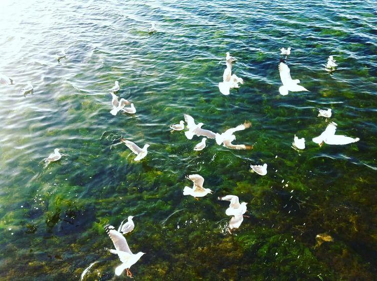 Woodbridge Island Lagoon, Milnerton, Cape Town