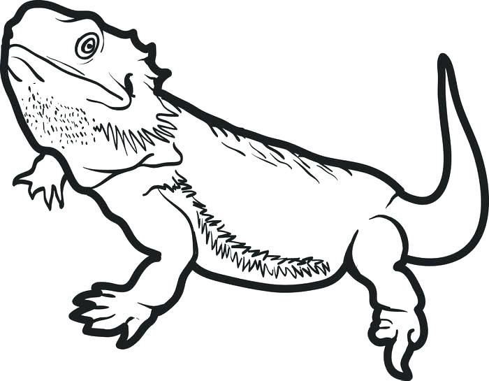 Bearded Dragon Coloring Pages Best Coloring Pages For Kids Dragon Coloring Page Bearded Dragon Colors Bearded Dragon Tattoo