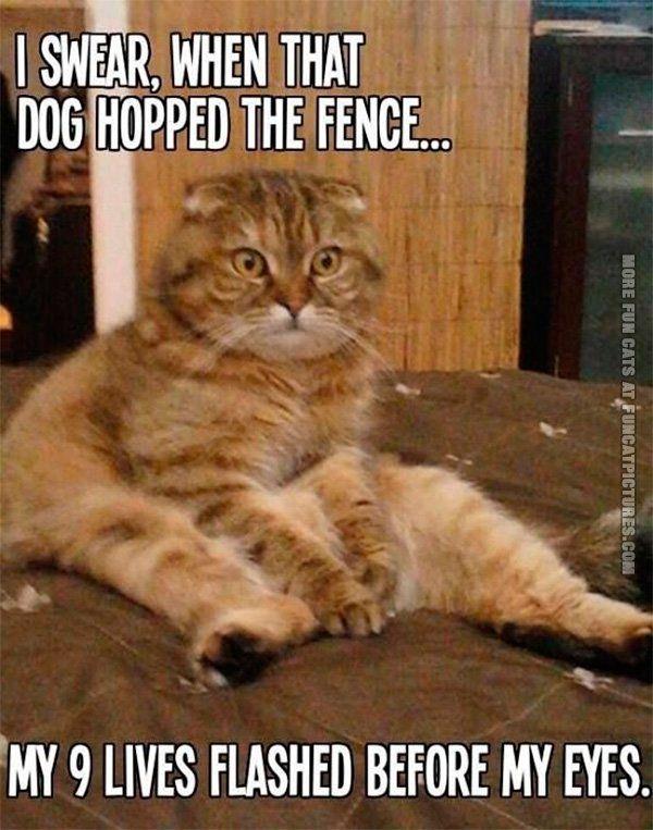 Cat in shock