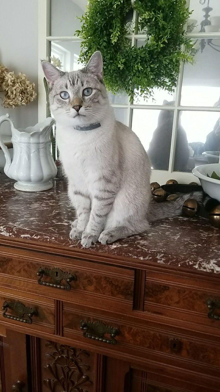 Modern Cat's Photo Contest - Cotton