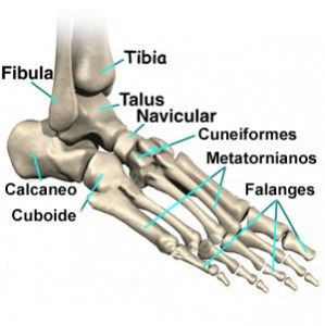 Ossos do pé
