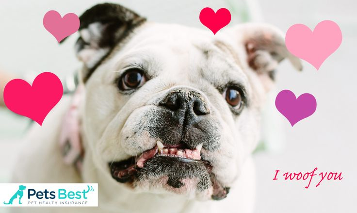 Protect the ones you love the most with pet health insurance from Pets Best!