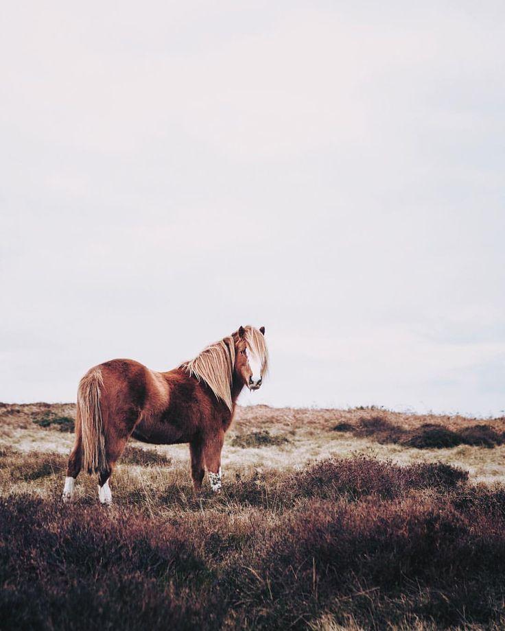 Wild ponies | Finn Beales