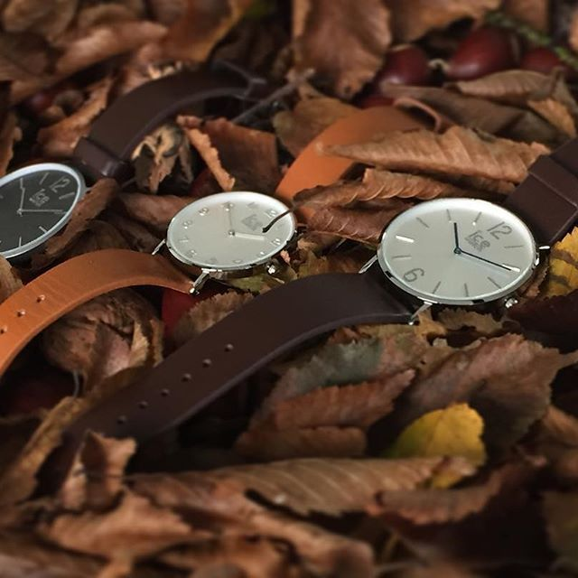 złota polska jesień #icewatch #bestwatch #love #autumn #fall #watch #zegarek #butikiswiss