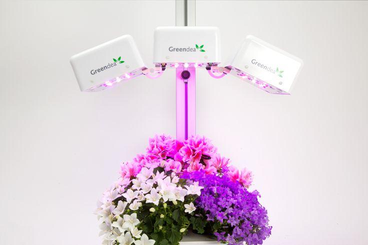 Fai crescere i tuoi fiori senza parassiti con il coltivatore #idroponico