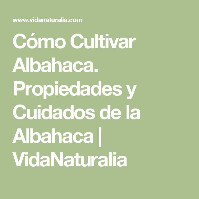Cómo Cultivar Albahaca. Propiedades y Cuidados de la Albahaca | VidaNaturalia