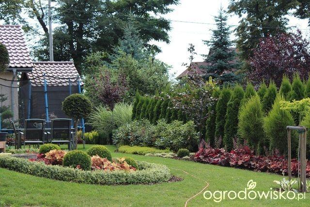 Ogród Sylwii od początku cz.II - strona 603 - Forum ogrodnicze - Ogrodowisko