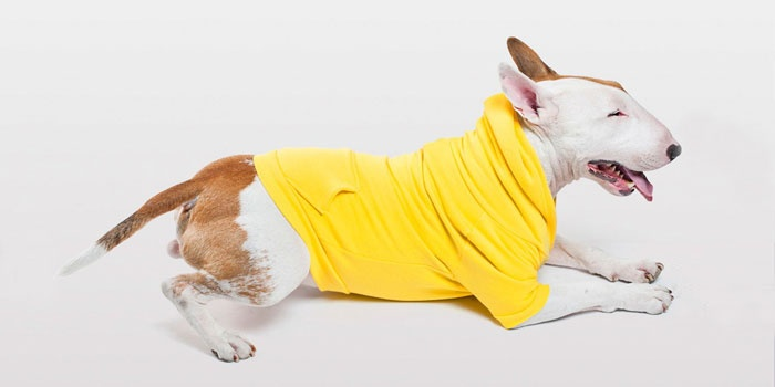 AA you had me at hoodies for dogs