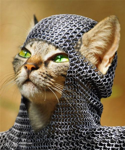 Getting ready for the Renaissance Faire at...Funny Pics, Knights, Funny Cat, Chains Mail, Funny Stuff, Red Dots, The Dots, Chainmail, Animal