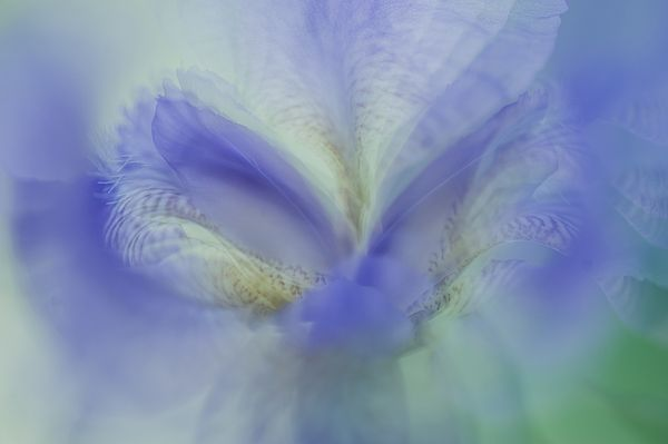 Ethereal Life 19. Interior Ideas by Jenny Rainbow. #Abstract #Photography #Iris #Macro #PastelColors #InteriorDesign #IdeasForHome #HomeDecor #FloralDecor #Rainbow #FramedArt #Canvas #FineArtPhotography #jennyRainbowFineArtPhotography#Purple #Blue