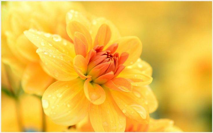 Yellow Flower Photography Wallpaper | yellow flower photography wallpaper 1080p, yellow flower photography wallpaper desktop, yellow flower photography wallpaper hd, yellow flower photography wallpaper iphone