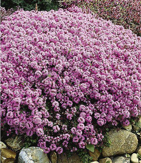 110 besten stauden bilder auf pinterest | schöner garten, pflanzen, Gartengestaltung