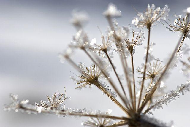 Crystal Flowers #1