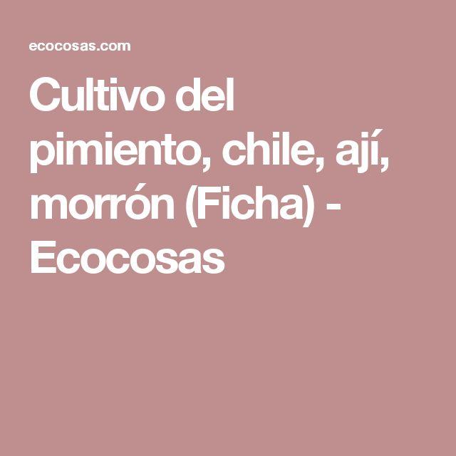 Cultivo del pimiento, chile, ají, morrón (Ficha) - Ecocosas