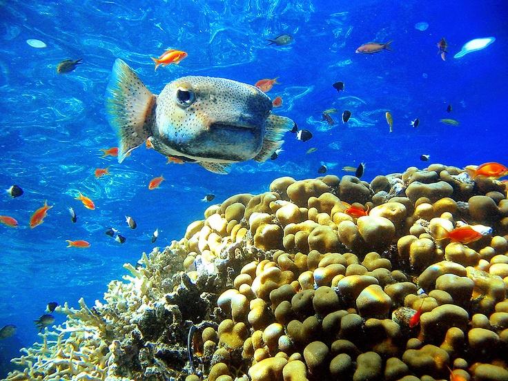 Image detail for -Trykk her for flere bilder fra Sharm El Sheik.