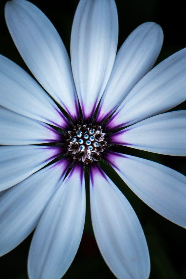White flower by Mirza Buljusmic on 500px
