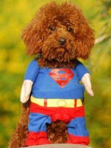 Traje de algodón azul divertido perro Superman - YoElijoElPrecio.com