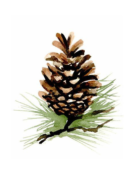 Pinecone Watercolor Art Print Wall Decor Painting In 2019 Watercolor Paintings