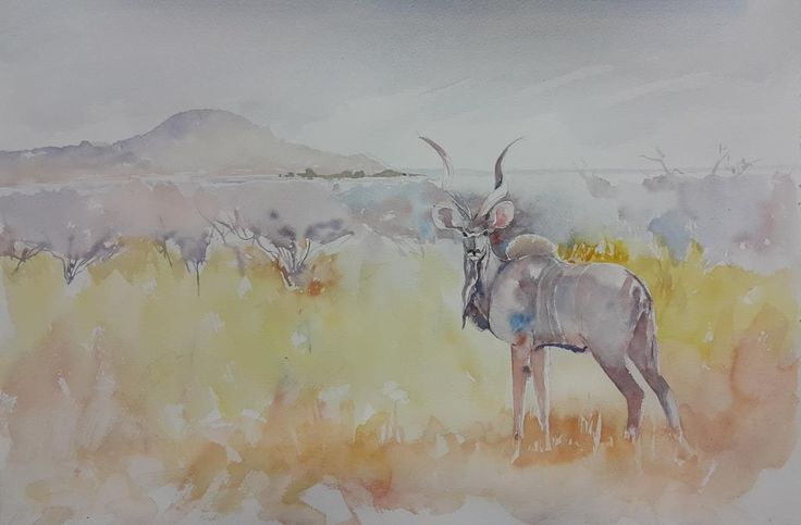 Here is a painting of a young kudu bull near Tau Lodge in Madikwe Game Reserve This is watercolour on 300gm Bockingford Cold Pressed and is about 380 x 550mm. I will see if it needs touch-ups tomor...