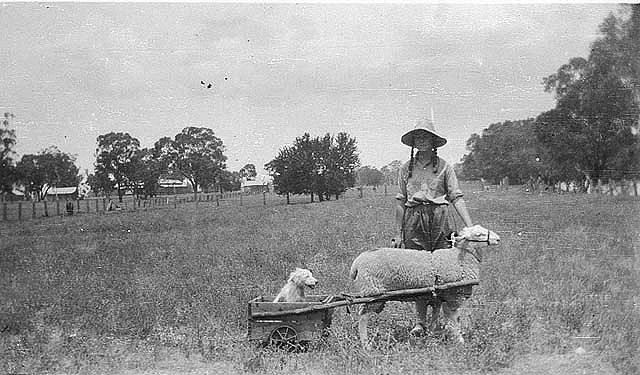 Yap Yap (dog) in cart pulled by Achong - Trundle, NSW, n.d. / by unknown photographer.  Find more detailed information about this photograph: http://acms.sl.nsw.gov.au/item/itemDetailPaged.aspx?itemID=389183.  From the collection of the State Library of New South Wales www.sl.nsw.gov.au