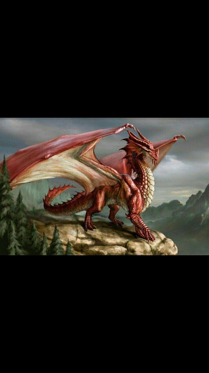 Dragon Warrior Diet