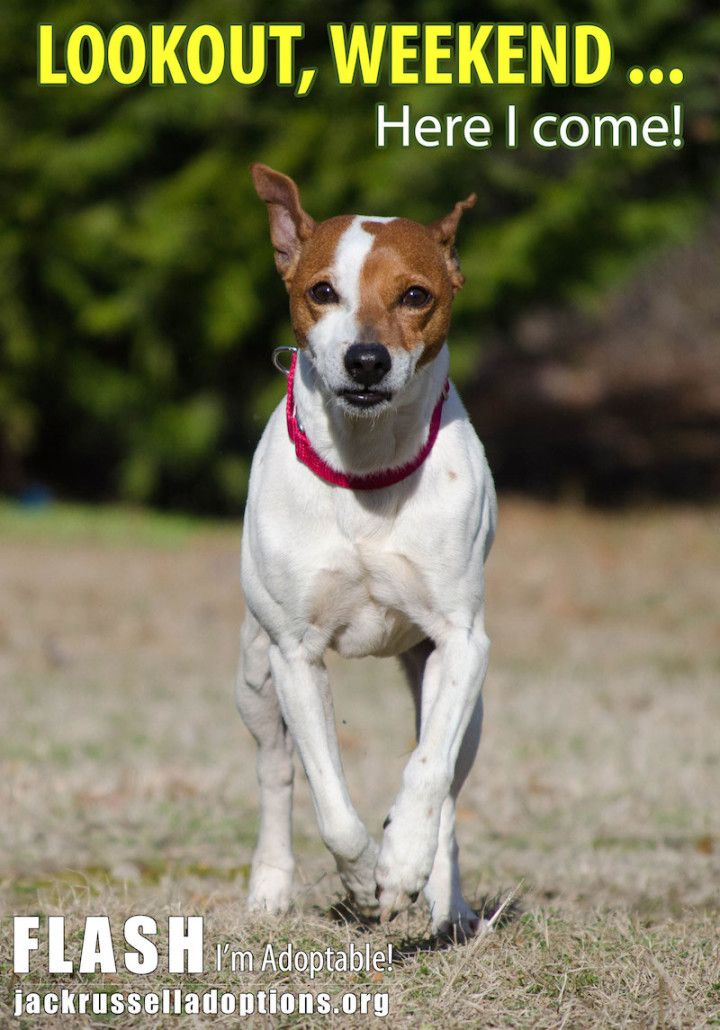 Pictures Of Rescue Dogs For Adoption