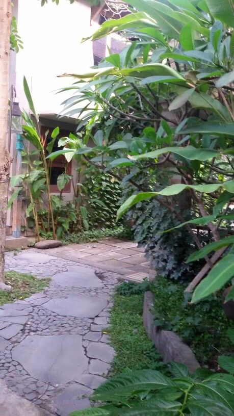View in my back office with tropical garden