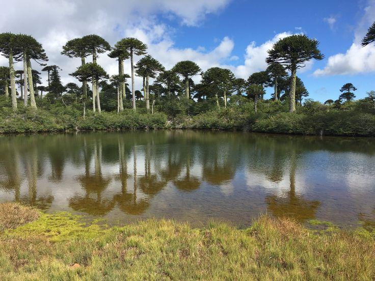 Trekking Lagunillas, Parque Nacional Tolhuaca