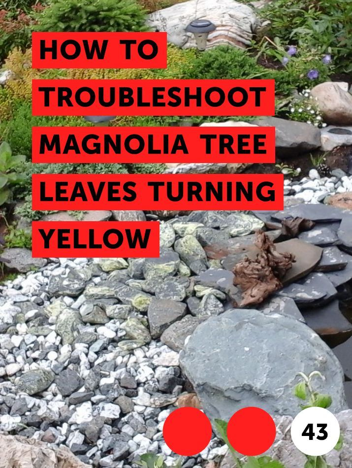 How To Troubleshoot Magnolia Tree Leaves Turning Yellow Trees