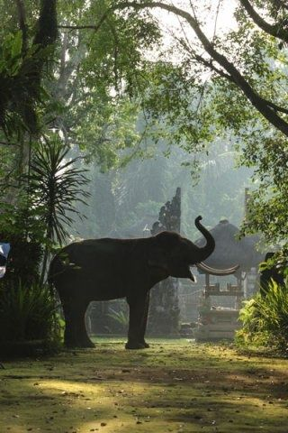Elephant Safari Park Lodge, Bali, Indonesia. This was incredible! Such beautiful, and human like animals.