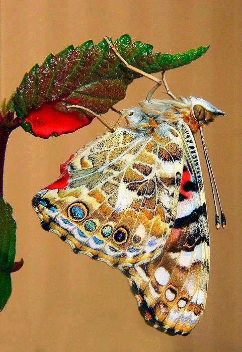 charm bracelet silver Butterfly