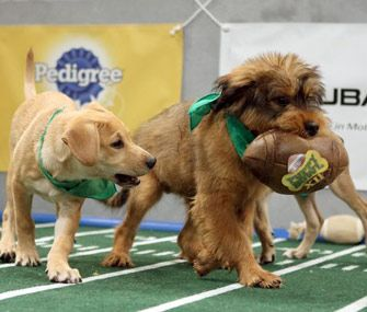 Animal Planet's Puppy Bowl is almost here. Find out what to expect during the cute competition and meet the starting lineup before it airs on Super Bowl Sunday.