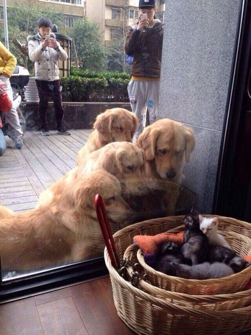 """""""Look at those weird looking puppies"""""""