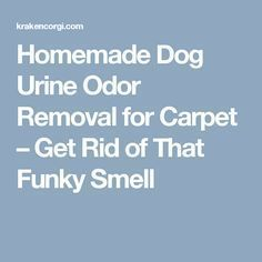 How To Get Dog Urine Smell Out Of Carpet Remove Stains Apps
