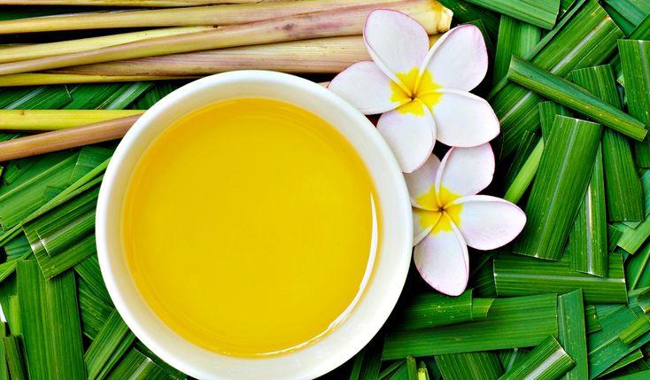 Confira em post + vídeo receitas de repelentes 100% naturais com eficácia cientificamente comprovada e conheça os benefícios do óleo essencial de citronela.