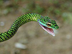 Amazon rainforest - Simple English Wikipedia, the free encyclopedia