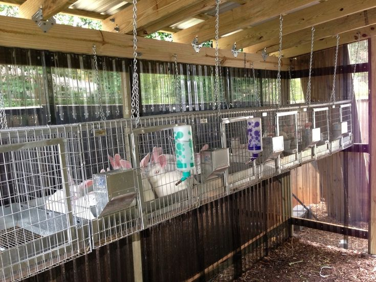 38 Best Images About Rabbits On Pinterest Tack Rooms