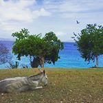 Island views at Caneel Bay Resort, visit caneelbay.com to book