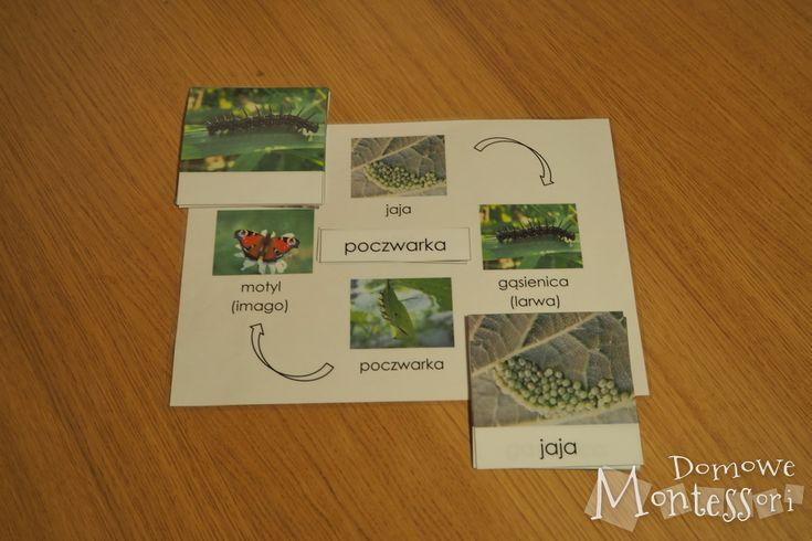 Karty zcyklem życia motyla