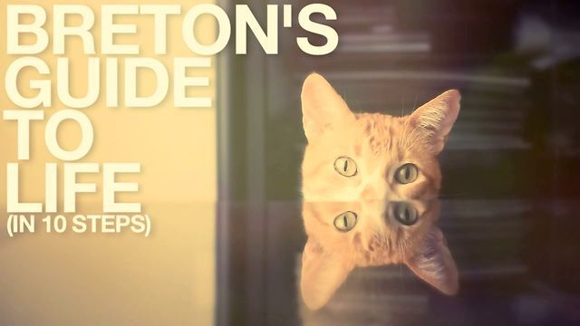 BRETON'S GUIDE TO LIFE (in 10 steps) by Ariel Belziti. Do cats know the secrets to living life?