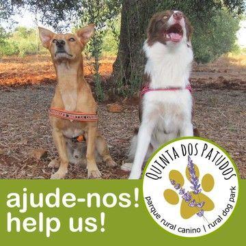 """Quinta dos Patudos - Rural Dog Park - Apoie a instalação da Quinta dos Patudos, um parque rural canino no Algarve onde poderá exercitar, brincar, socializar e treinar os seus patudos.  Support the  installation of """"Quinta dos Patudos"""", a rural dog park  at Algarve (Portugal)."""