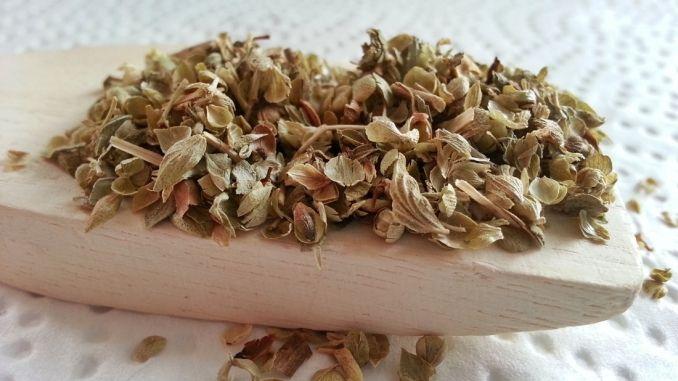 Oregano gegen Motten und Blattläuse   Frag Mutti