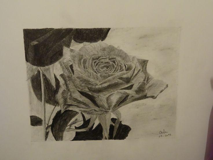 rose - crayon graphite