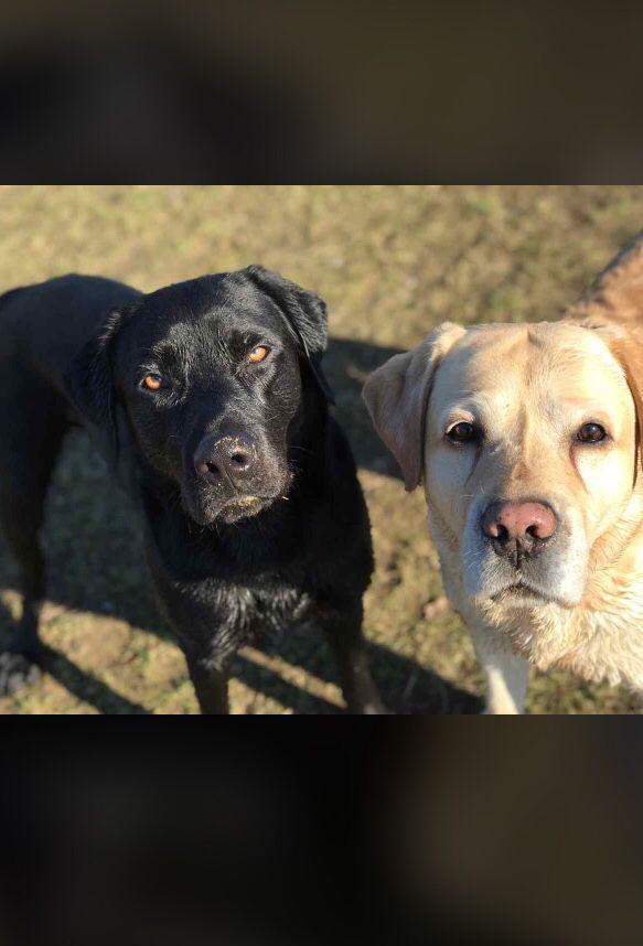 Ausflug Fur 2 X Labrador Nach Hamburg Allermohe Am Sonntag Heute Mal Kein Office Mit Bildern Hunde Ausflug