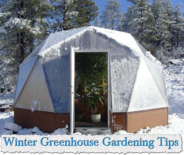 Best 25+ Winter Greenhouse Ideas On Pinterest