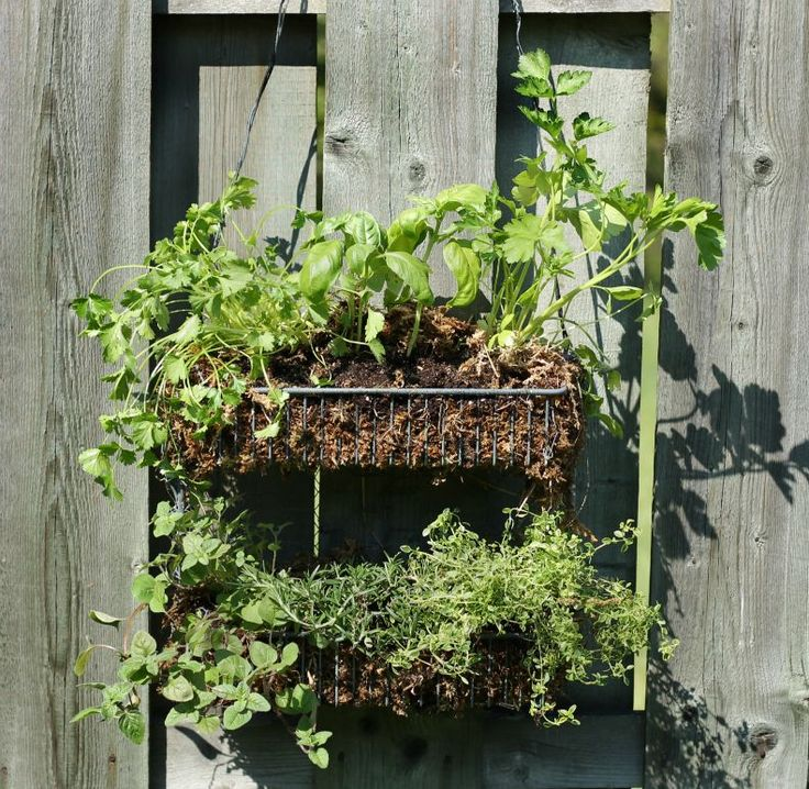 Hanging Herb Garden Ideas the 25+ best hanging herb gardens ideas on pinterest | kitchen