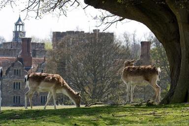 Knole Park, Kent, UK  Built in 1406. Vita Sackville West was born here