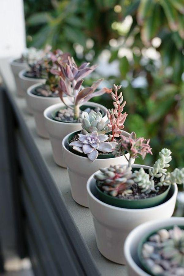 gartenideen herbst garten topfpflanzen balkonpflanzen sukkulenten balkonm bel balkonpflanzen. Black Bedroom Furniture Sets. Home Design Ideas