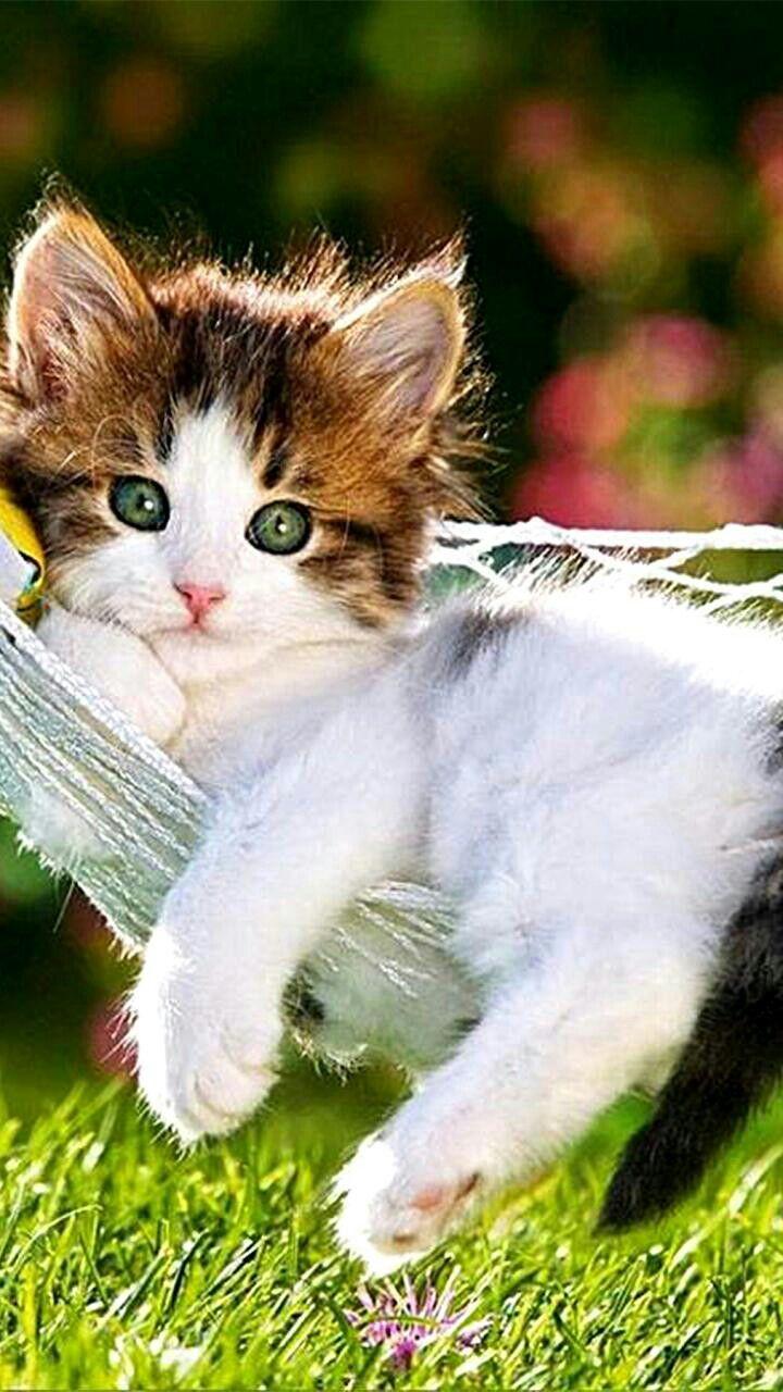best namoro feliz e estável fidelidade images on pinterest